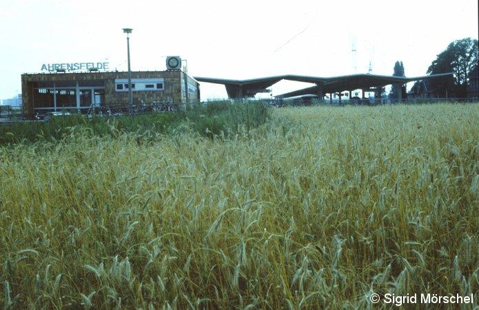 Bild: Getreidefeld